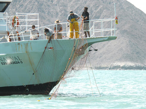 Fisher pulling net from Gulf of Mexico