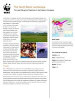 The North Bank Landscape  Brochure