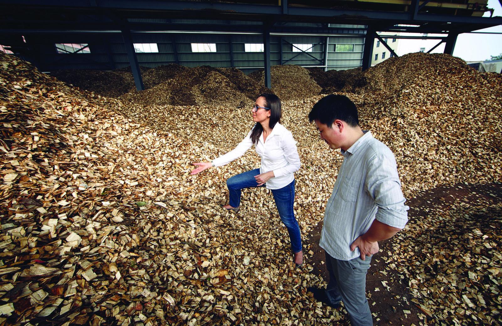Freshly cut wood at a paper mill in Tengzhou, China