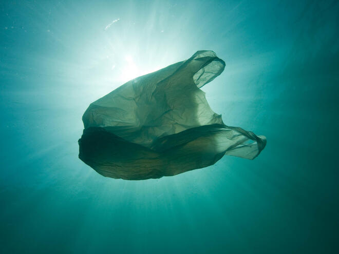 plastic bag WW267810 Sue Daly