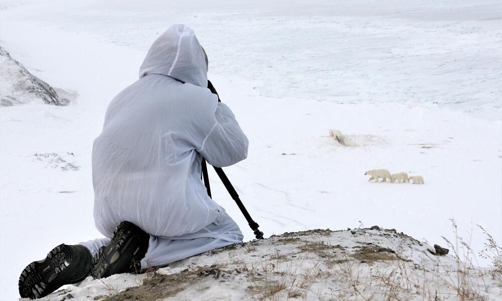 A member of the polar bear patrol team sits on top of a tall snowy hill and observes three polar bears walking below