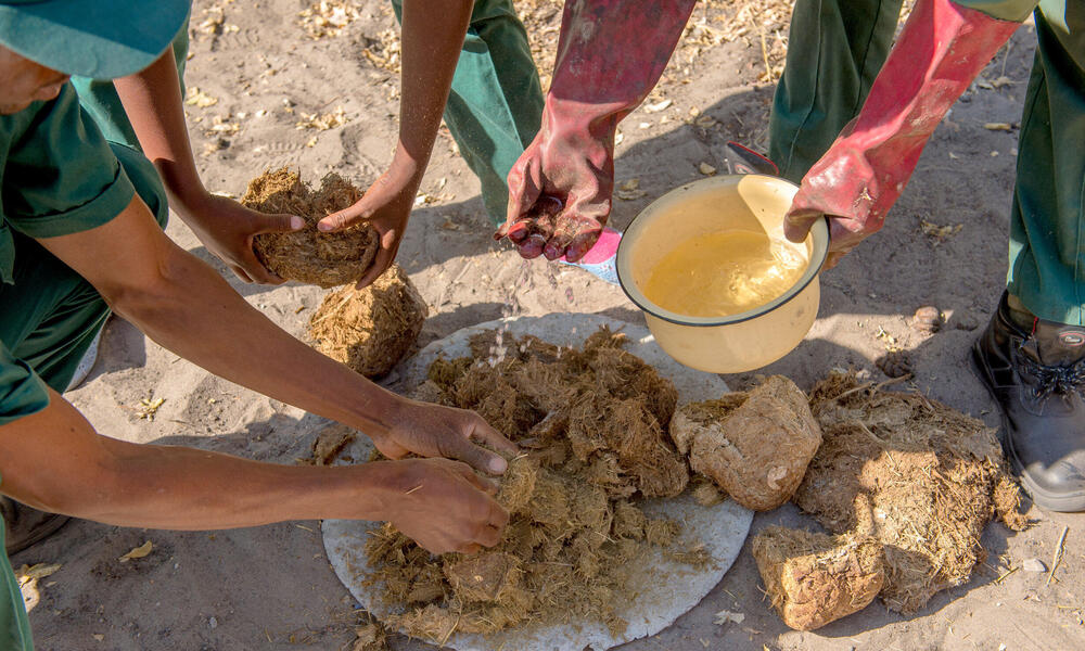 A group breaks up the pile of elephant dung and adds water.