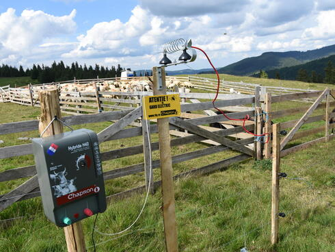 Electric fencing protecting a flock of sheep