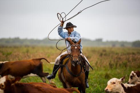 Ranch hand herding cattle at El Cachepé Ranch and Wildlife Refuge. La Eduvigis, Gran Chaco region, Northern Argentina.