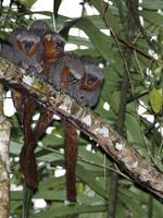 Untold Treasures: New Species Discoveries in the Amazon 2014-2015 Brochure
