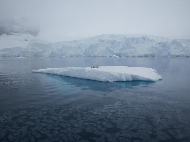 sea ice and seal WW264762 Chris Johnson