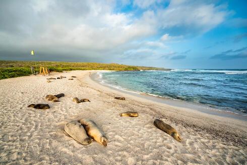 sea lion galapagos Antonio Busiello WW289225
