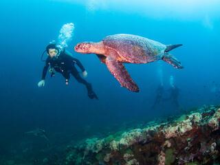 sea turtle and diver Antonio Busiello WW289509