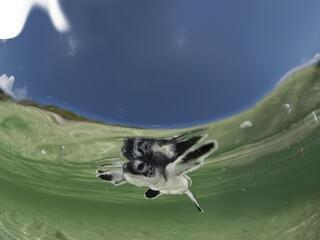 Sea Turtle Toolkit Poster