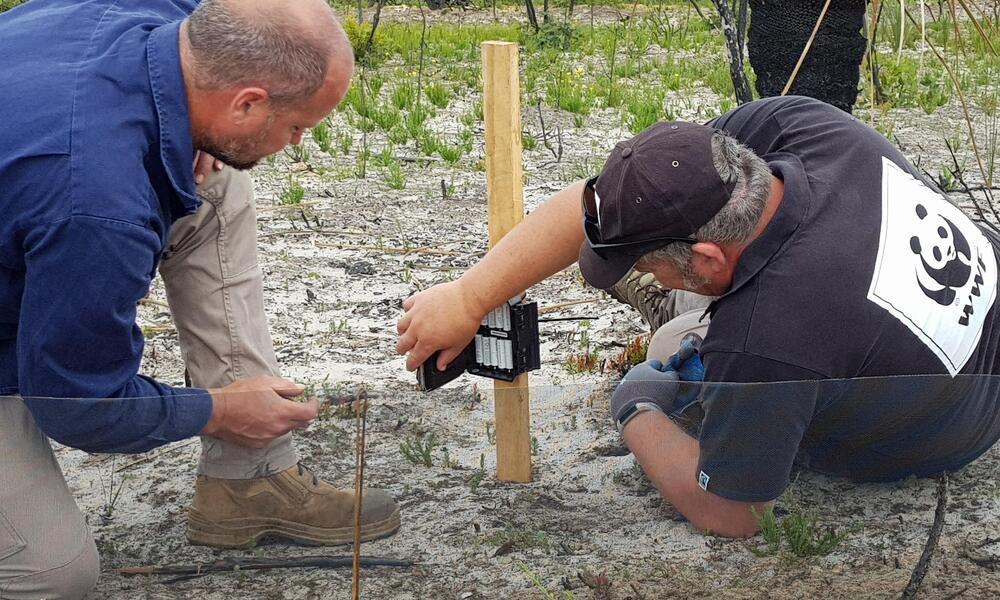 Two men crouching down on the ground to set up netting and a camera to capture images of wildlife passing by