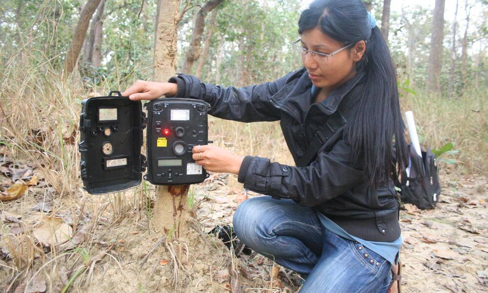 tiger_8.9.2012_Nepal_Camera_4
