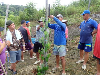 A group of pepper farmers gather around a wooden stake in the ground as a man in the middle wraps a pepper plant to the stake