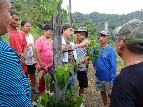 A groupd of pepper farmers gathered around a wooden stake that a green pepper vine is growing on
