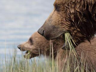 update bears fall2018