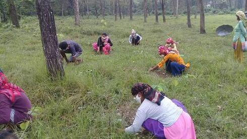 A group of people in a forest crouch down in the grass to pull weeds