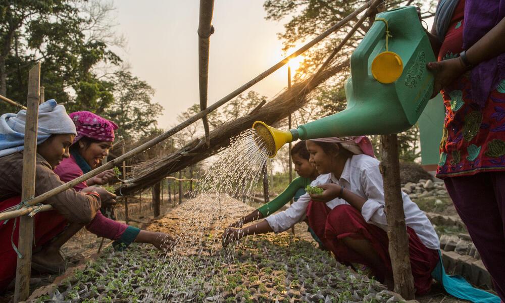 Women with plants in Nepal