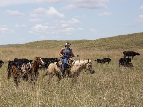 Jamie Sexson helps move cattle in the Nebraska Sandhills, United States