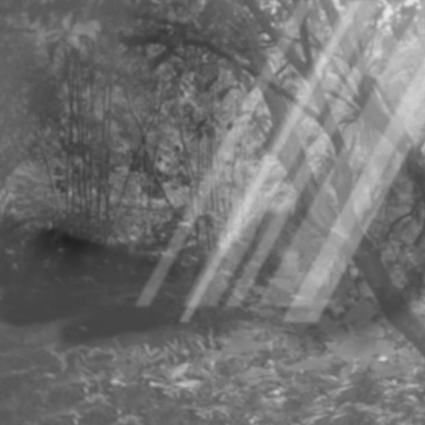 Forest scene 31